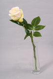 Thai Rose - White