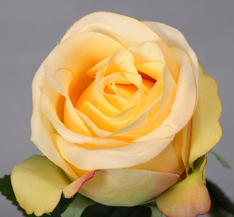 Thai Rose - Yellow