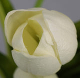 Small Tulip Buds - White