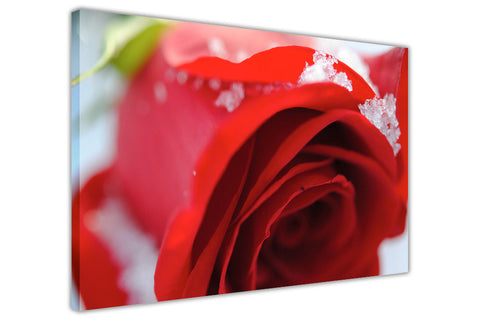 Beautiful Red Rose on Framed Canvas Wall Art Prints Floral Pictures Home Decoration Room Deco Poster Photo Artwork-3D