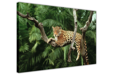 Jaguar on Tree Canvas Wall Art Pictures Prints Canvas It Up