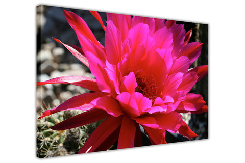 Pink Flower on Framed Canvas Wall Art Prints Floral Pictures Home Decoration Room Deco Poster Photo Artwork-3D