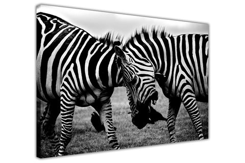 Affectionate Wild Zebras on Framed Canvas Wall Art Prints Room Deco Poster Photo Landscape Pictures Home Decoration Artwork-3D