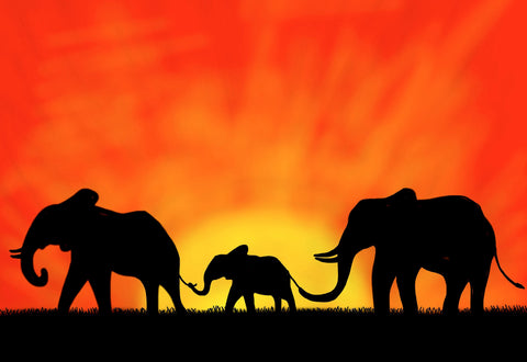 african elephant family silhouette canvas wall art pictures prints canvas it up front