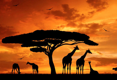 Beautiful African Giraffe Family Silhouette Large Canvas