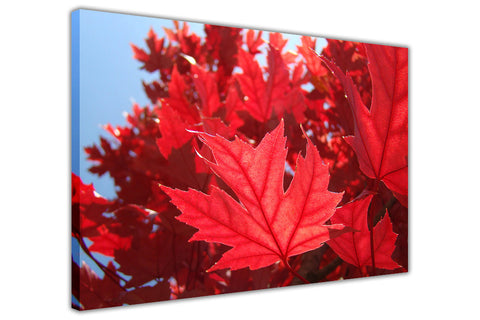 Beautiful Red Autumn Leaves on Framed Canvas Wall Art Prints Floral Pictures Home Decoration Room Deco Poster Photo Artwork-3D