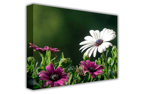 White and Purple Daisy Flower on Framed Canvas Wall Art Prints Floral Pictures Home Decoration Room Deco Poster Photo Artwork-3D