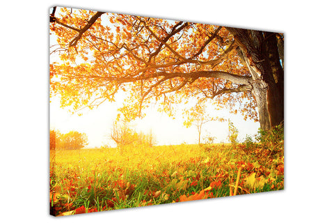 Beautiful Autumn Sun and Tree on Framed Canvas Wall Art Prints Pictures Home Decoration Room Deco Poster Photo Artwork-3D