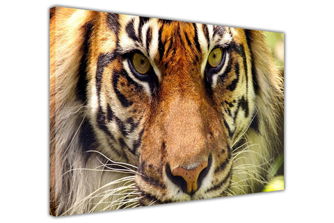Iconic Bengal Tiger on Framed Canvas Wall Art Prints Room Deco Poster Photo Landscape Pictures Home Decoration Artwork-3D