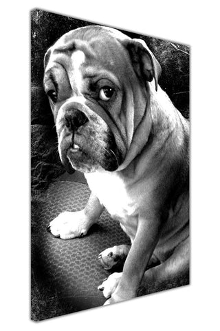 Black and White Cute British Bulldog on Framed Canvas Wall Art Prints Room Deco Poster Photo Landscape Pictures Home Decoration Artwork-3D