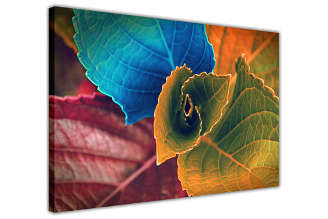 Coloured Leaves on Framed Canvas Wall Art Prints Floral Pictures Home Decoration Room Deco Poster Photo Artwork-3D