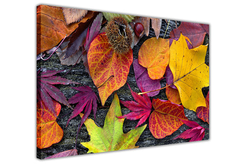 Colourful Autumn Leaves on Framed Canvas Wall Art Prints Floral Pictures Home Decoration Room Deco Poster Photo Artwork-FRONT