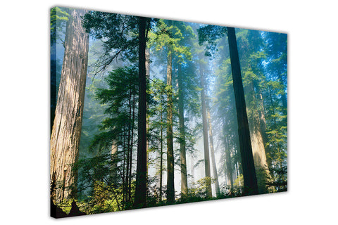 Forest With Tall Trees on Framed Canvas Wall Art Prints Landscape Pictures Home Decoration Room Deco Poster Photo Artwork-3D