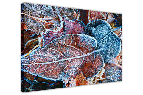 Frozen Leaves on Framed Canvas Wall Art Prints Floral Pictures Home Decoration Room Deco Poster Photo Artwork-3D