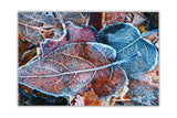 Frozen Leaves on Framed Canvas Wall Art Prints Floral Pictures Home Decoration Room Deco Poster Photo Artwork-Front