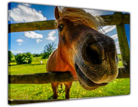 Funny Horse Animal Pictures Canvas Print Wall Art for Living Room Bedroom Office Home Decoration Children-3D
