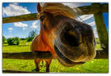 Funny Horse Animal Pictures Canvas Print Wall Art for Living Room Bedroom Office Home Decoration Children-Front