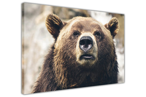 Brown Grizzly Bear on Framed Canvas Wall Art Prints Room Deco Poster Photo Landscape Pictures Home Decoration Artwork-3D