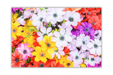 Multi Coloured Flowers on Framed Canvas Wall Art Prints Floral Pictures Home Decoration Room Deco Poster Photo Artwork-Front