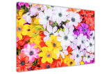 Multi Coloured Flowers on Framed Canvas Wall Art Prints Floral Pictures Home Decoration Room Deco Poster Photo Artwork-3D