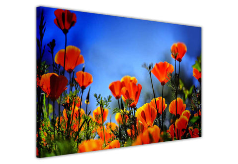Orange poppy flowers on framed canvas prints wall art pictures floral posters home decoration artowork-3D