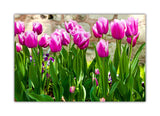 Pink Tulip Flowers on Framed Canvas Wall Art Prints Floral Pictures Home Decoration Room Deco Poster Photo Artwork-Front