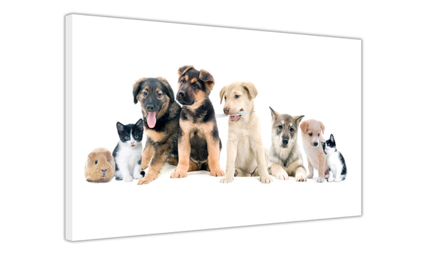 Collage Of Puppies Kittens And Guinea Pig On Framed Canvas