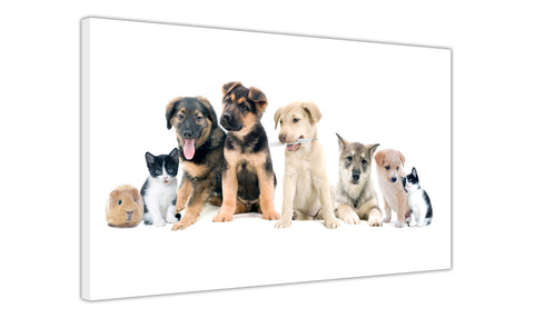 Collage of Puppies Kittens and Guinea Pig on Framed Canvas Wall Art Prints Room Deco Poster Photo Landscape Pictures Home Decoration Artwork-3D