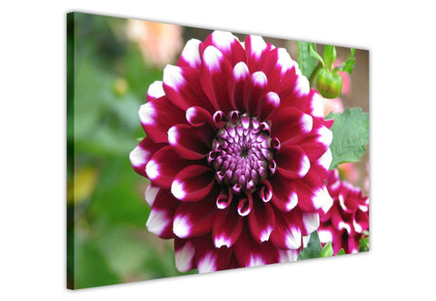 Purple Dahlia Flower on Framed Canvas Wall Art Prints Floral Pictures Home Decoration Room Deco Poster Photo Artwork-3D