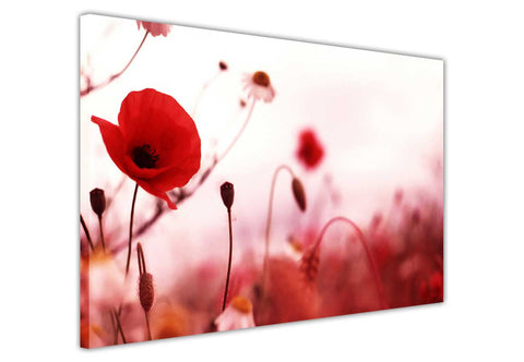 red poppy flower on framed canvas prints wall art pictures floral posters home decoration artowork-3D