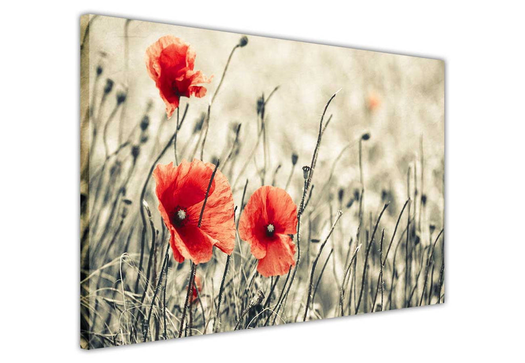 Sepia red flowers on framed canvas prints wall art pictures floral ...