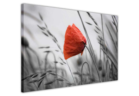 Black and White red poppy flowers on framed canvas prints wall art pictures floral posters home decoration artowork-Front
