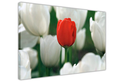 Red and White Tulip Flowers on Framed Canvas Wall Art Prints Floral Pictures Home Decoration Room Deco Poster Photo Artwork-3D