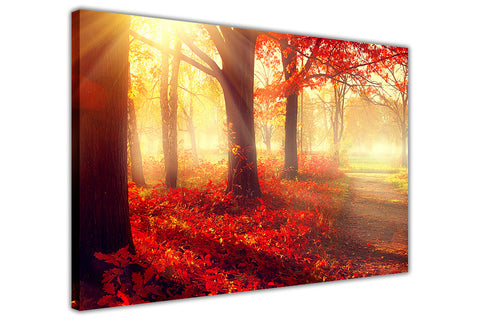 Sunshine Over Autumn Forest on Framed Canvas Wall Art Prints Room Deco Poster Photo Landscape Pictures Home Decoration Artwork-3D