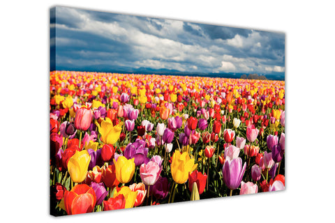 Colourful Tulip Field on Framed Canvas Wall Art Prints Floral Pictures Home Decoration Room Deco Poster Photo Artwork-3D