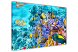 Under Water Sea Life on Framed Canvas Wall Art Prints Room Deco Poster Photo Landscape Pictures Home Decoration Artwork-3D