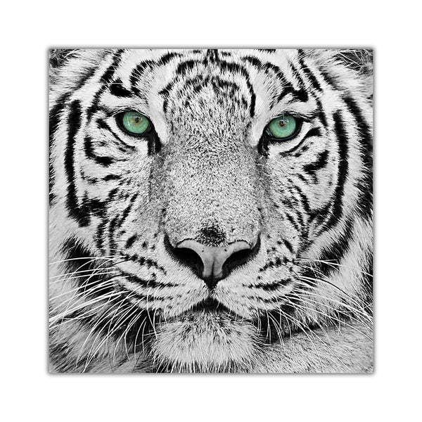 White Tiger Green Eyes On Framed Canvas Wall Art Prints