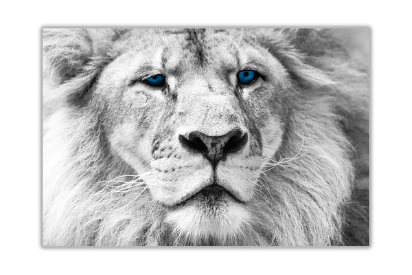 White Lion Blue Eyes On Framed Canvas Wall Art Prints Room