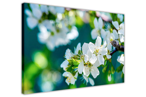 White Blossoming Spring Flowers on Framed Canvas Wall Art Prints Floral Pictures Home Decoration Room Deco Poster Photo Artwork-3D