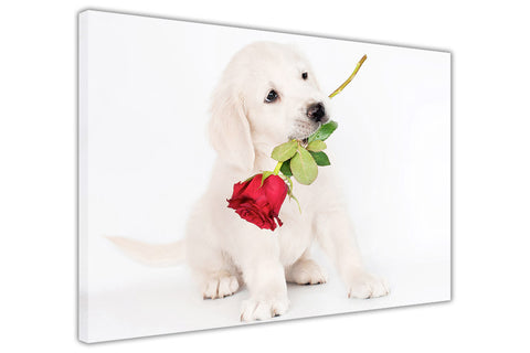 Cute white labrador with red rose in mouth on Canvas Wall Art Pictures Home Decoration Framed Prints Canvas It Up 3D