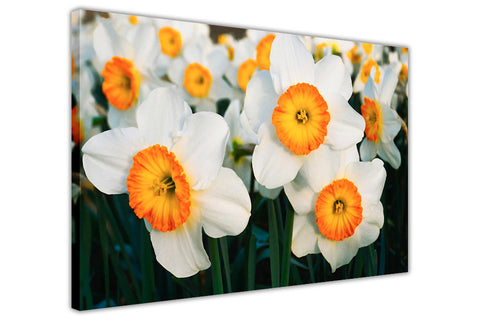 White and Orange Flowers on Framed Canvas Wall Art Prints Floral Pictures Home Decoration Room Deco Poster Photo Artwork-3D