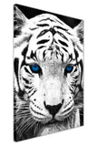 Portrait White Tiger With Blue Eyes on Framed Canvas Wall Art Prints Room Deco Poster Photo Landscape Pictures Home Decoration Artwork-3D
