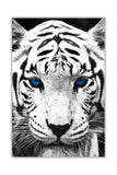 Portrait White Tiger With Blue Eyes on Framed Canvas Wall Art Prints Room Deco Poster Photo Landscape Pictures Home Decoration Artwork-Front
