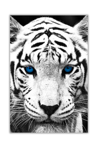 Portrait White Tiger With Blue Eyes On Framed Canvas Wall