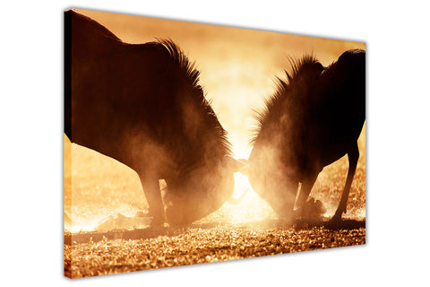 Wildebeest in Sunset on Framed Canvas Wall Art Prints Room Deco Poster Photo Landscape Pictures Home Decoration Artwork-3D