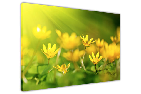 Yellow Oxalis Flower on Framed Canvas Wall Art Prints Floral Pictures Home Decoration Room Deco Poster Photo Artwork-3D