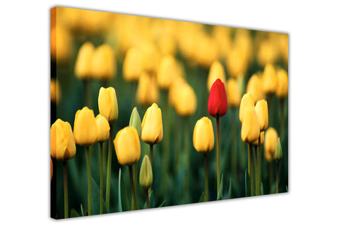Yellow and red tulip field on framed canvas prints wall art pictures floral posters home decoration artowork-3D