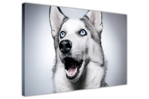 Funny Husky on Framed Canvas Wall Art Prints Room Deco Poster Photo Landscape Pictures Home Decoration Artwork-3D