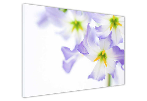 Lilac purple and yellow flowers on framed canvas prints wall art pictures floral posters home decoration artowork-3D