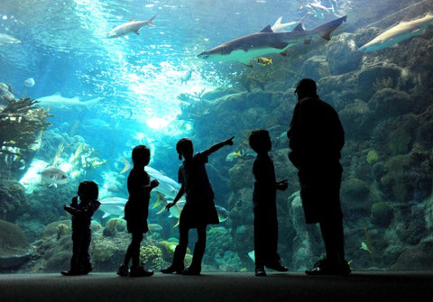 Shedd Aquarium gift certificates make a great gift for the animal enthusiast in your life! They are available in any whole-dollar amount and allow you to include a custom message. you can receive a $3 on-site discount on your Shedd ticket by showing a valid school ID or current paystub.